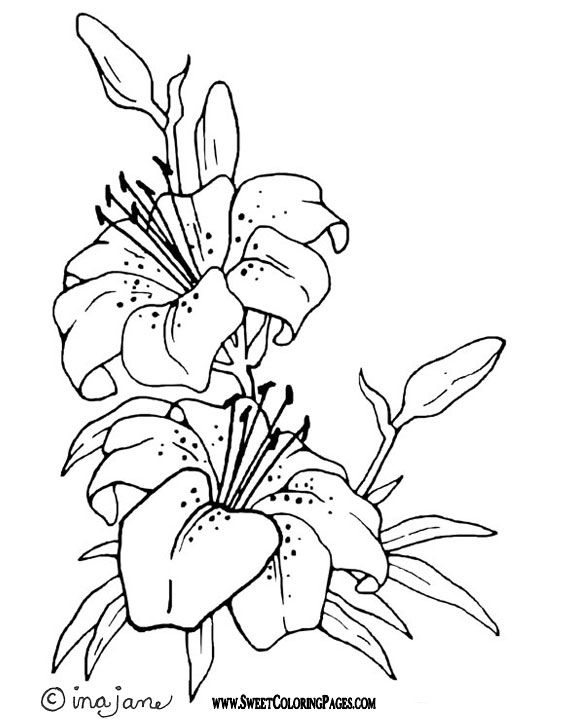 White Rain Lily coloring #9, Download drawings