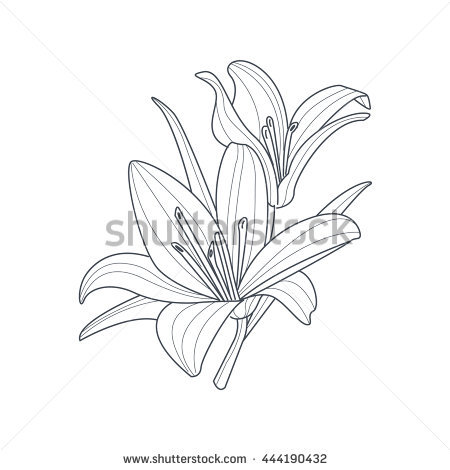 White Rain Lily coloring #15, Download drawings