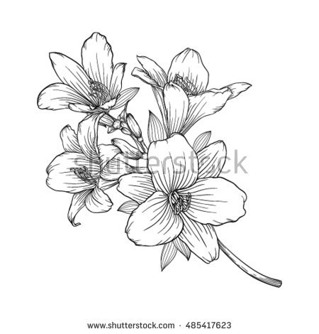 White Rain Lily coloring #11, Download drawings