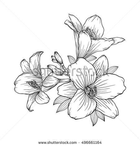 White Rain Lily coloring #14, Download drawings