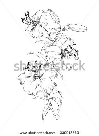 White Rain Lily coloring #18, Download drawings