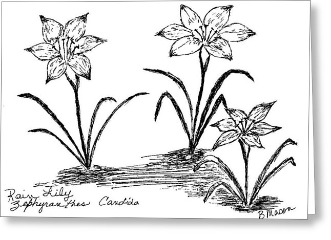 White Rain Lily coloring #20, Download drawings