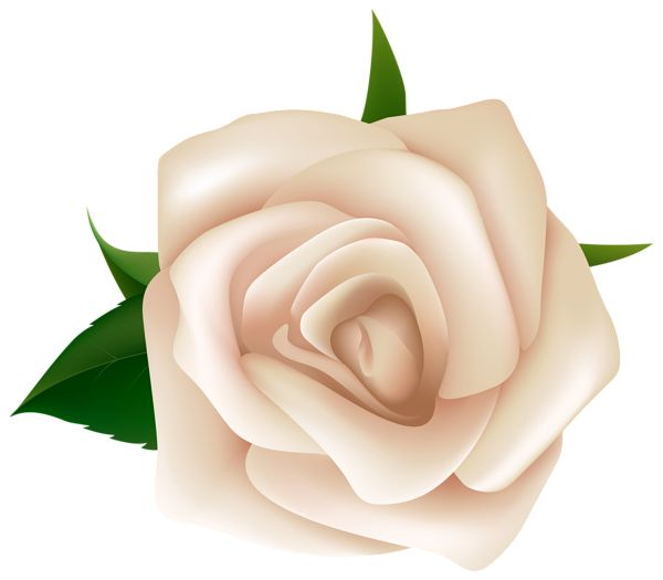 White Rose clipart #10, Download drawings