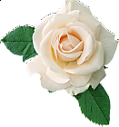 White Rose clipart #11, Download drawings