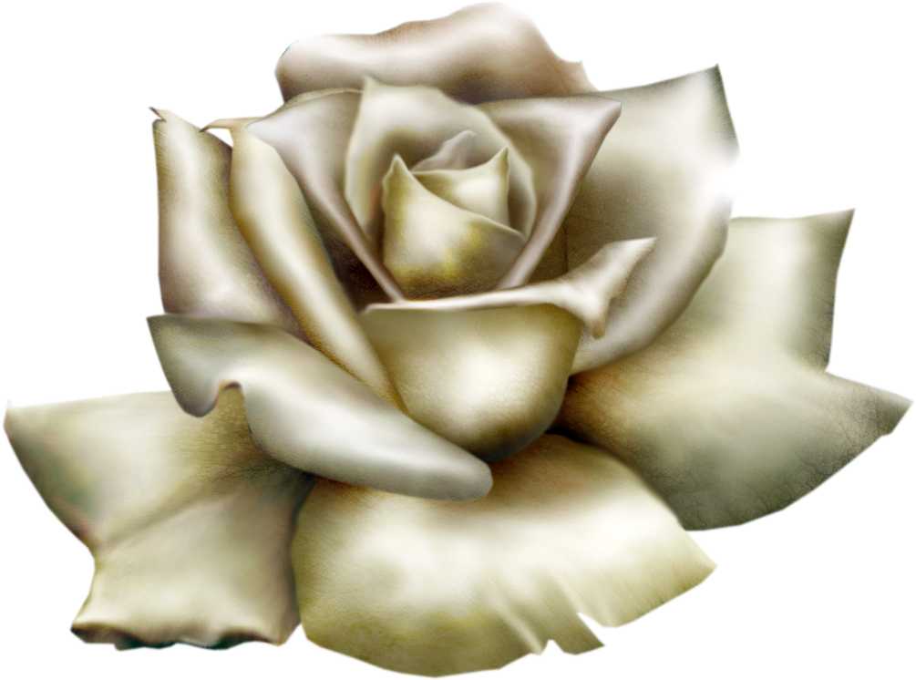 White Rose clipart #14, Download drawings