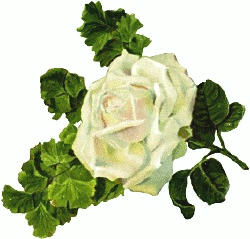 White Rose clipart #2, Download drawings