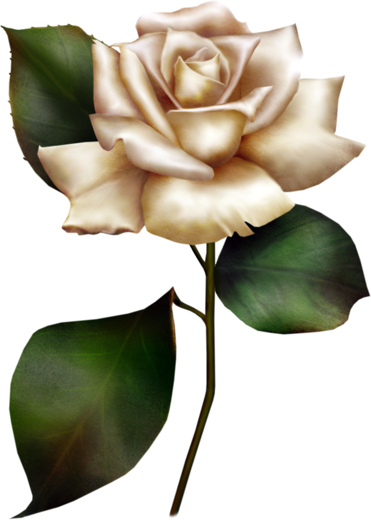 White Rose clipart #15, Download drawings