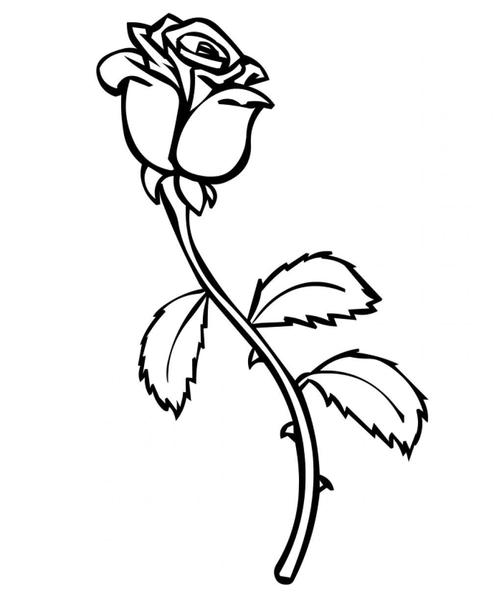 White Rose coloring #8, Download drawings