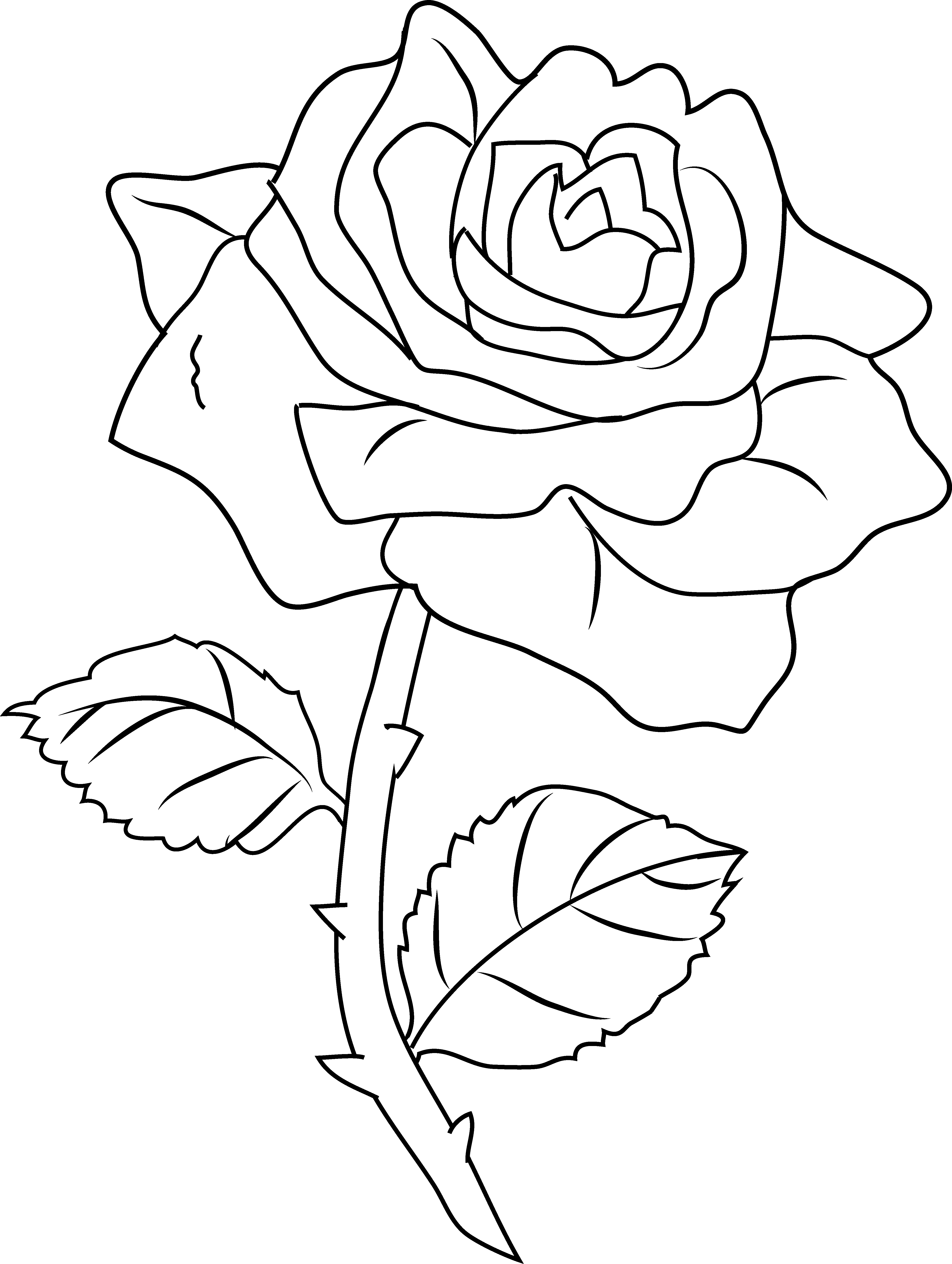 Black Rose coloring #4, Download drawings