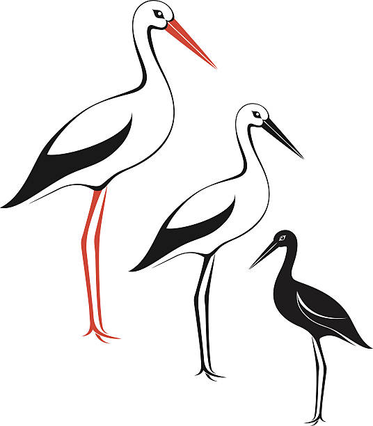 White Stork clipart #7, Download drawings
