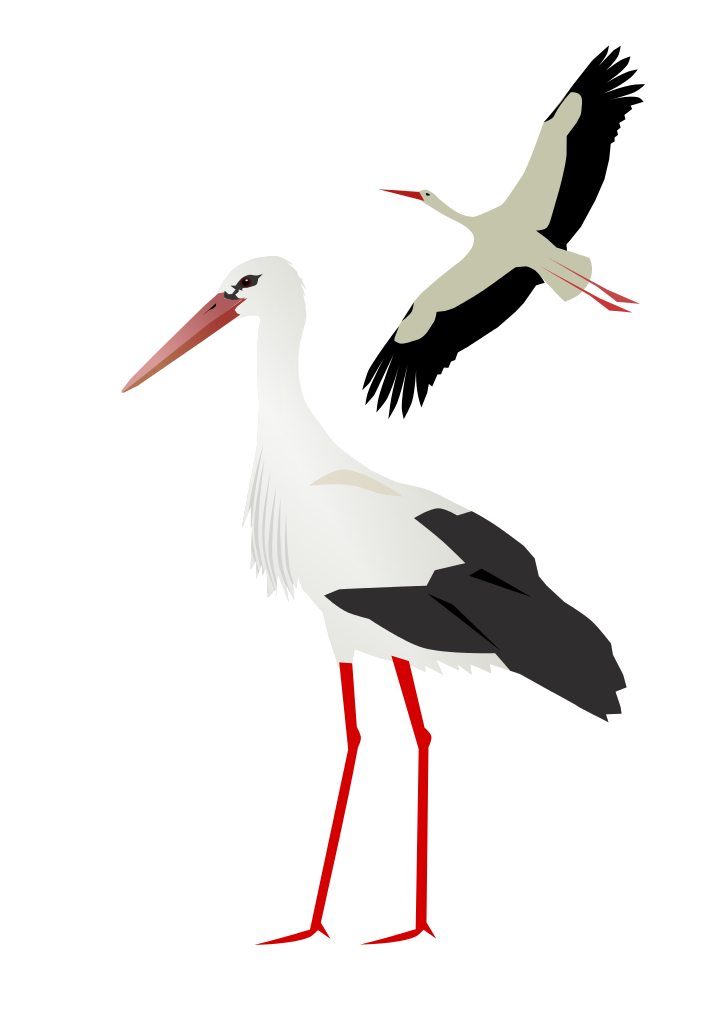 White Stork svg #14, Download drawings