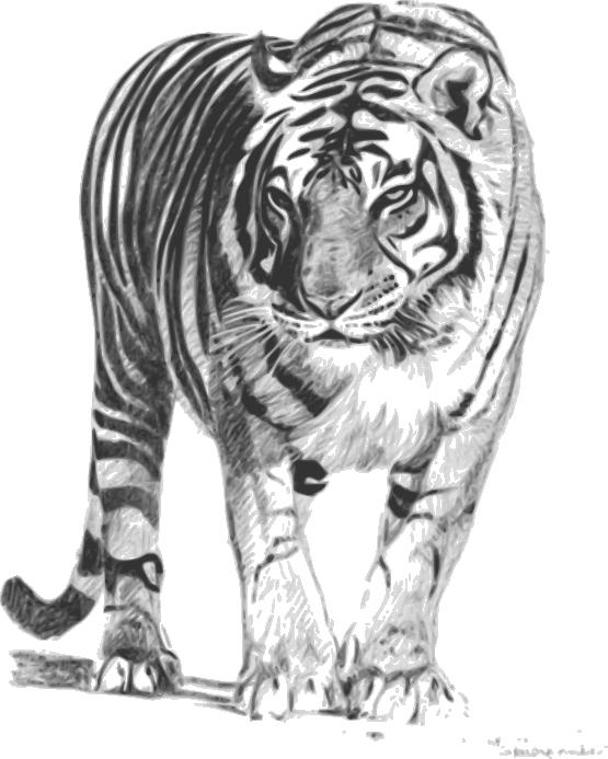 White Tiger svg #6, Download drawings