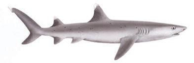 White Tipped Reef Shark clipart #19, Download drawings