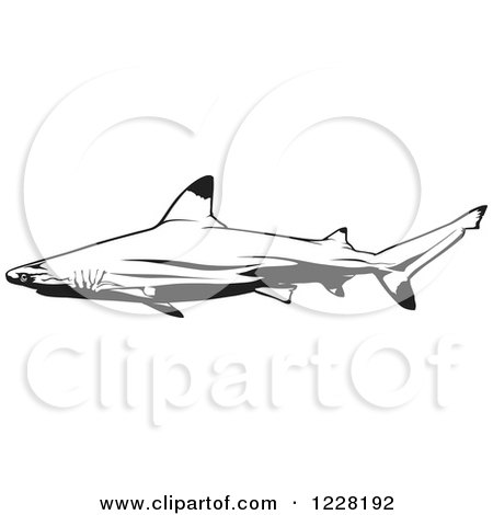 White Tipped Reef Shark clipart #15, Download drawings