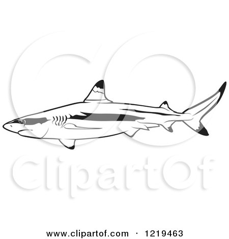 White Tipped Reef Shark clipart #12, Download drawings