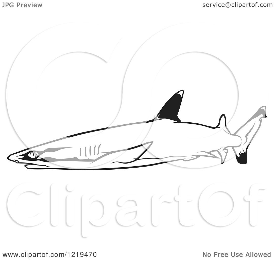 White Tipped Reef Shark clipart #16, Download drawings