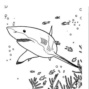 White Tipped Reef Shark coloring #13, Download drawings