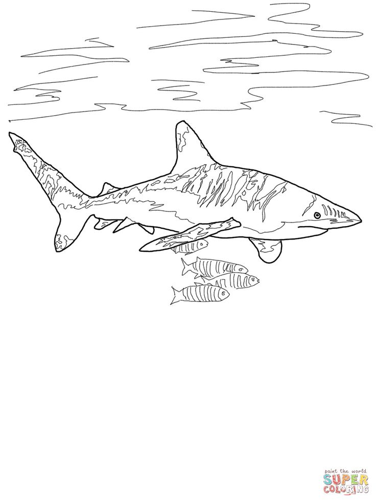 White Tipped Reef Shark coloring #2, Download drawings