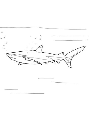 White Tipped Reef Shark coloring #17, Download drawings