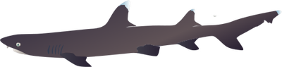 White Tipped Reef Shark svg #14, Download drawings