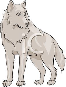 White Wolf clipart #13, Download drawings