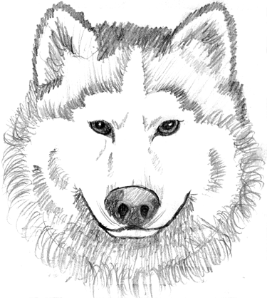 White Wolf clipart #20, Download drawings