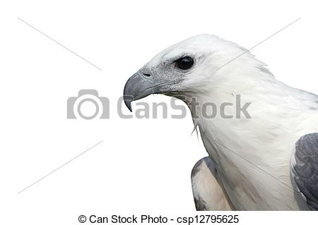 White-bellied Sea Eagle clipart #17, Download drawings