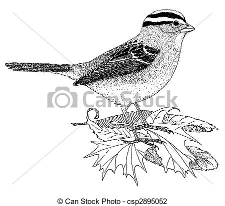 White-crowned Sparrow clipart #14, Download drawings