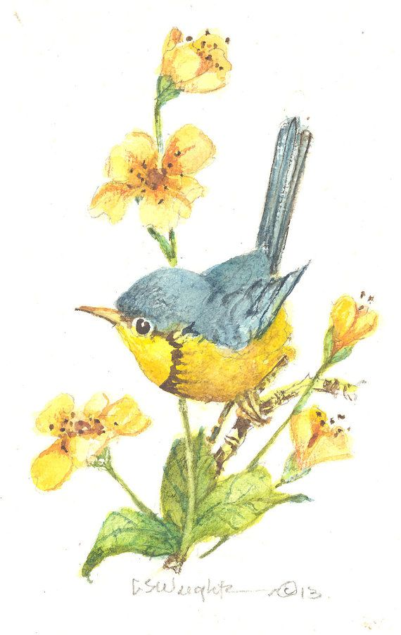 White-eared Warbler clipart #2, Download drawings