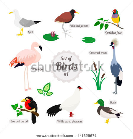 White-eared Warbler clipart #6, Download drawings
