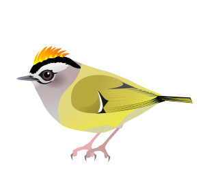 White-eared Warbler svg #13, Download drawings