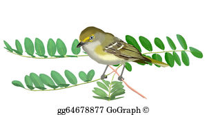 White-eyed Virio clipart #1, Download drawings