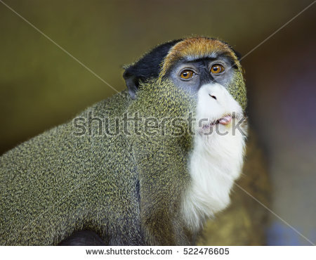 White-faced Guenon clipart #1, Download drawings