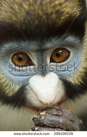 White-faced Guenon clipart #18, Download drawings