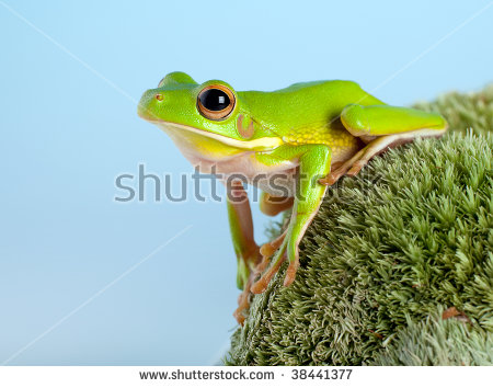 White-lipped Tree Frog clipart #10, Download drawings
