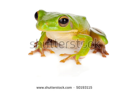 White-lipped Tree Frog clipart #14, Download drawings