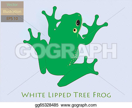 White-lipped Tree Frog clipart #16, Download drawings