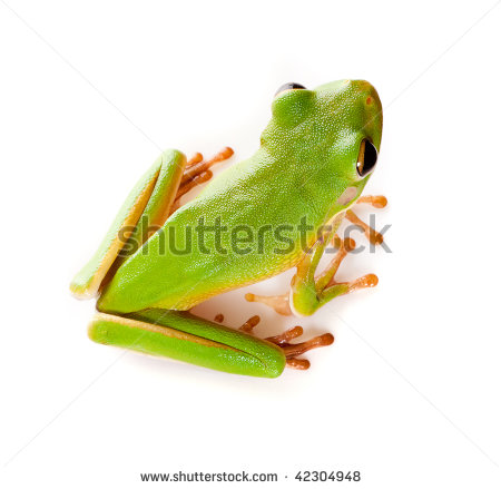 White-lipped Tree Frog clipart #17, Download drawings