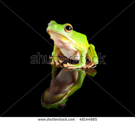 White-lipped Tree Frog clipart #2, Download drawings