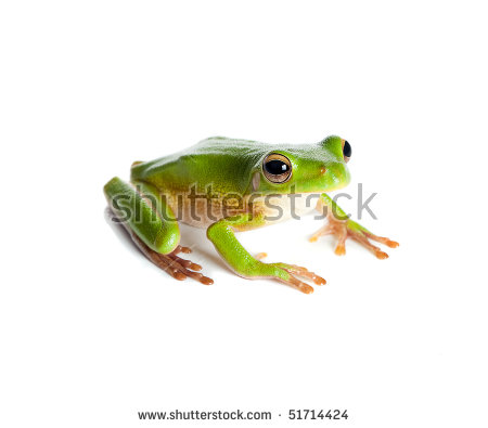 White-lipped Tree Frog clipart #5, Download drawings