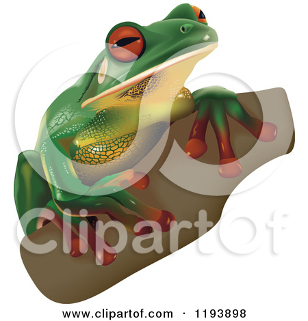 White-lipped Tree Frog clipart #8, Download drawings