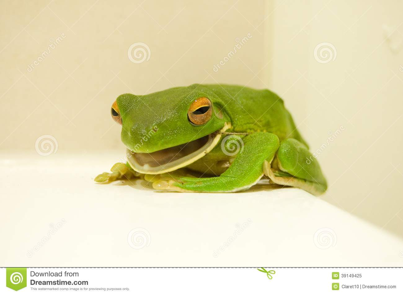 White-lipped Tree Frog clipart #6, Download drawings