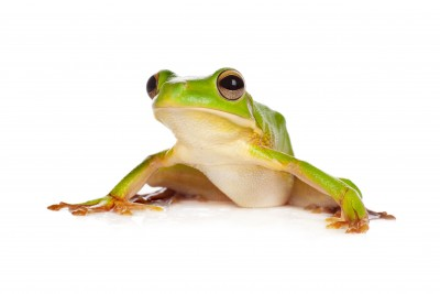 White-lipped Tree Frog svg #1, Download drawings