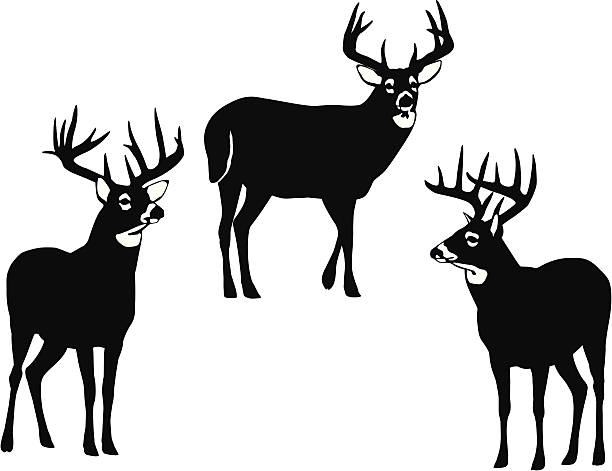 White-tailed Deer clipart #9, Download drawings