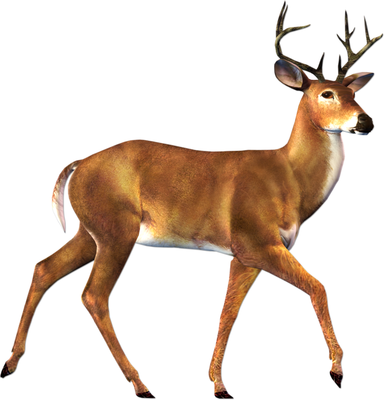 White-tailed Deer clipart #1, Download drawings