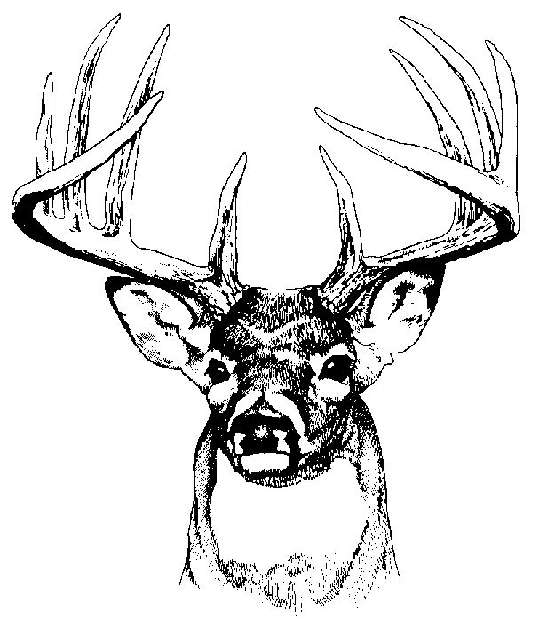 White-tailed Deer clipart #17, Download drawings