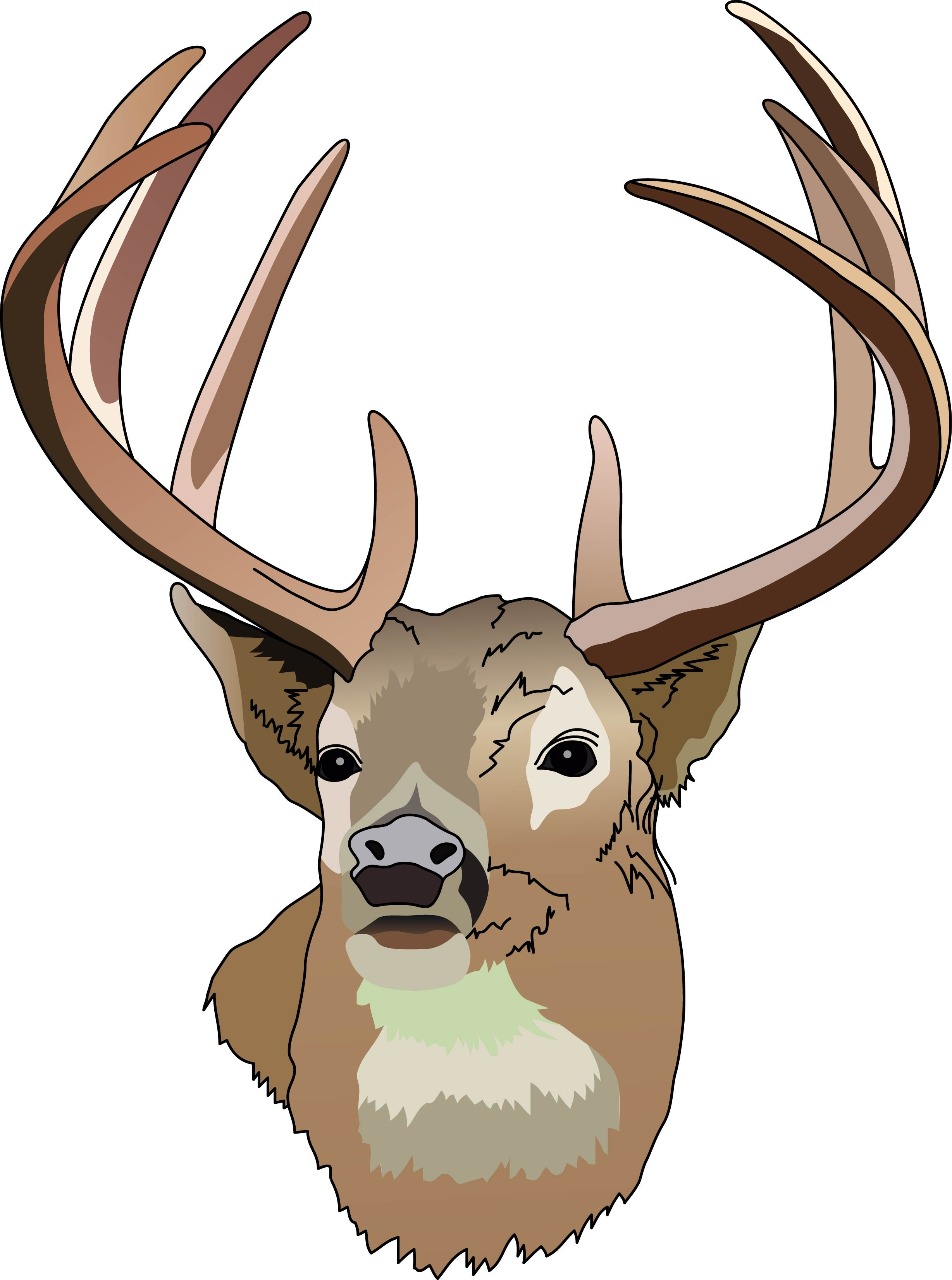 White-tailed Deer clipart #2, Download drawings