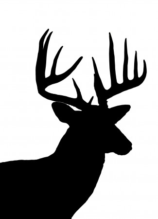 White-tailed Deer svg #2, Download drawings
