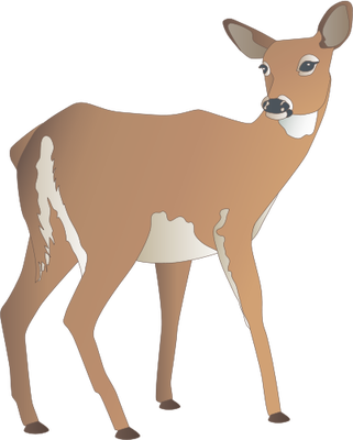 White-tailed Deer svg #19, Download drawings