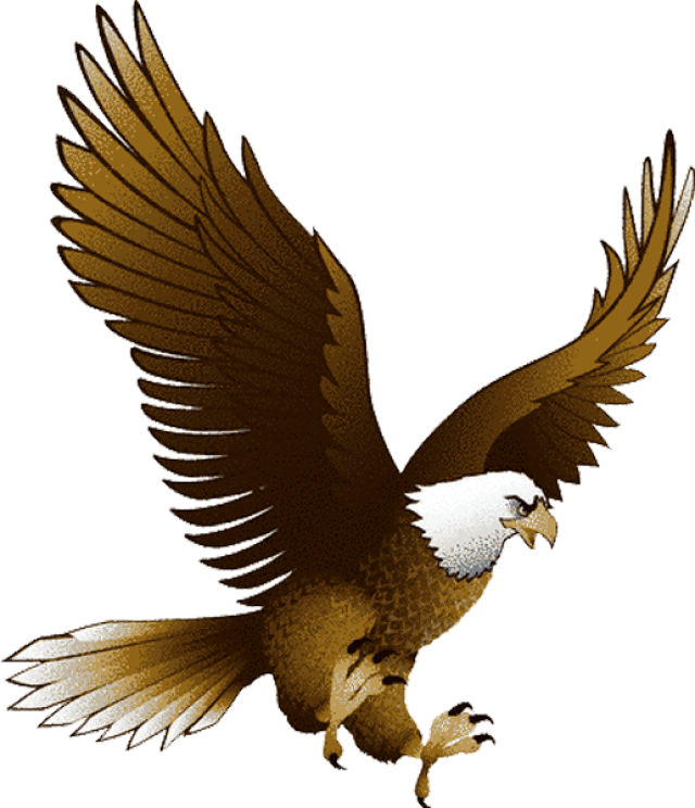 White-tailed Eagle clipart #13, Download drawings
